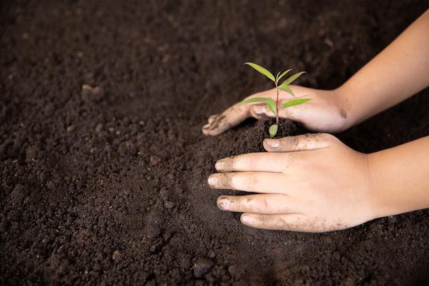 Dziecko ręce trzyma i opiekuje się młodą zieloną rośliną Darmowe Zdjęcia