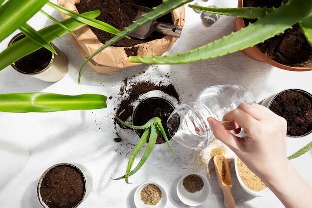 Dziewczyna Podlewanie Zasadzone Sukulent Do Domu Ogród Ponowne Użycie Cyny Do Uprawy Roślin. Zero Odpadów, Recykling, Ponowne Użycie, Recykling. Widok Z Góry Premium Zdjęcia