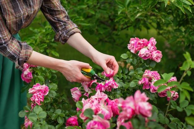 Dziewczyna przycina krzak (róża) z sekatorami w ogrodzie Premium Zdjęcia