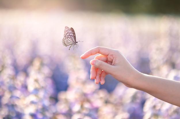Dziewczyna Uwalnia Motyla Ze Słoika, Moment Złotego Błękitu Pojęcie Wolności Premium Zdjęcia