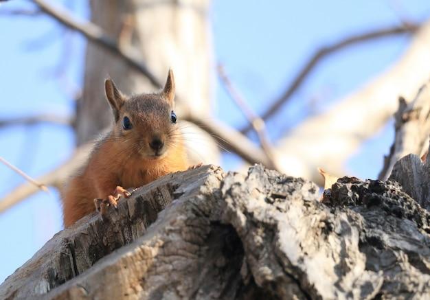 Dzika Wiewiórka Na Drzewie Darmowe Zdjęcia