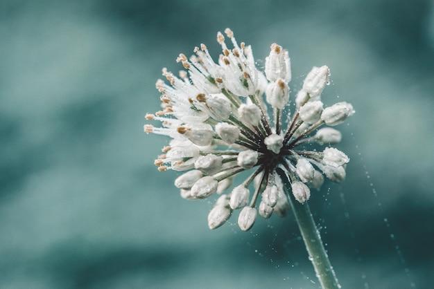 Dzikiego Pora Biały Kwiat Na Błękicie Premium Zdjęcia