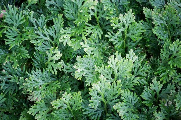 Dżungla Zielone Liście W Tropikalnym Ogrodzie Premium Zdjęcia