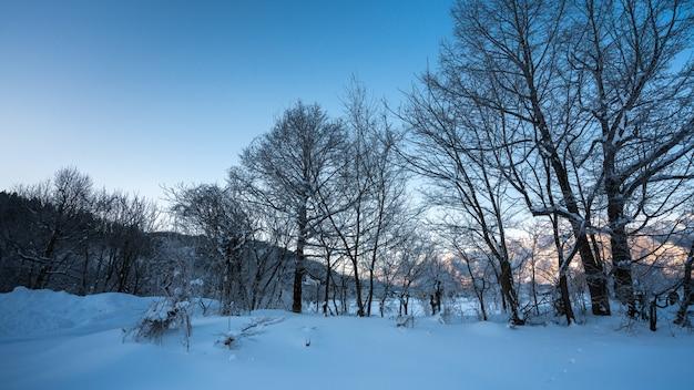 Egzotyczna Góra Z Zimowym Krajobrazem Premium Zdjęcia