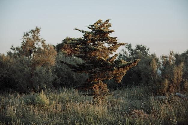 Egzotyczne Drzewo Na Polu Trawy W Otoczeniu Drzew Z Pochmurnego Nieba W Darmowe Zdjęcia
