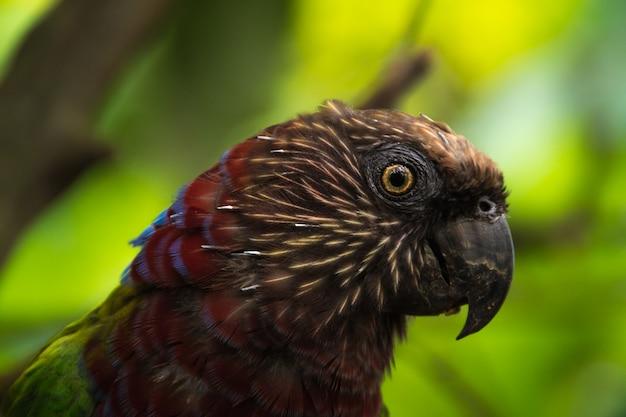 Egzotyczny Czerwony I Zielony Papugi Zakończenie Up Premium Zdjęcia