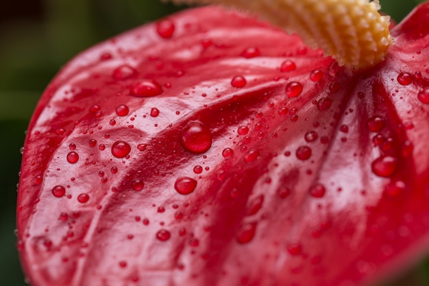 Egzotyczny Kwiat Z Bliska Premium Zdjęcia
