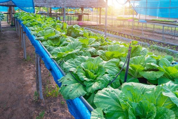 Ekologiczne gospodarstwo warzywne Premium Zdjęcia