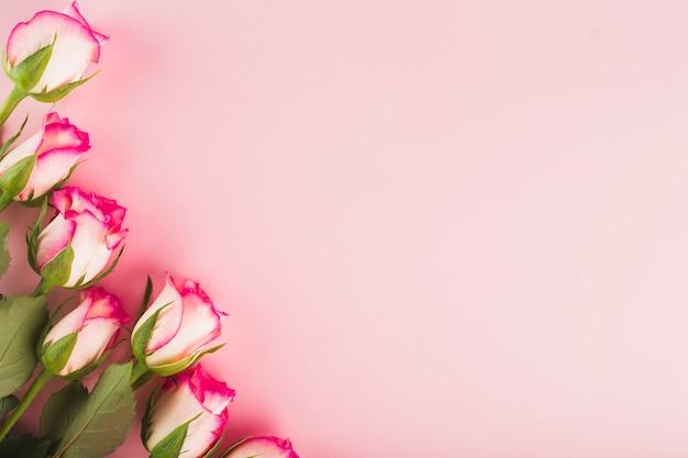 Eleganckie róże na różowo Darmowe Zdjęcia