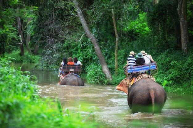 Elephant Trekkingowa Przygoda Przez Dżunglę W Tajlandii Premium Zdjęcia