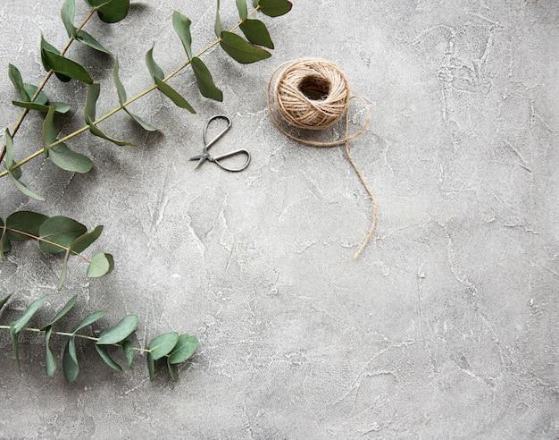 Eukaliptus Rozgałęzia Się Na Betonowym Tle Premium Zdjęcia