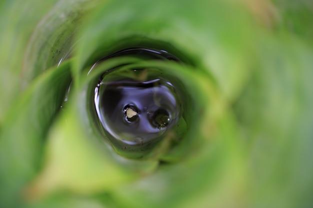 Eyeball Szpieguje Nieśmiały Urocze Kochanie Darmowe Zdjęcia