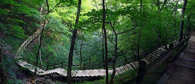 Fascynujący Widok Drewnianych Schodów W Pięknym Lesie Z Bujną Przyrodą Darmowe Zdjęcia