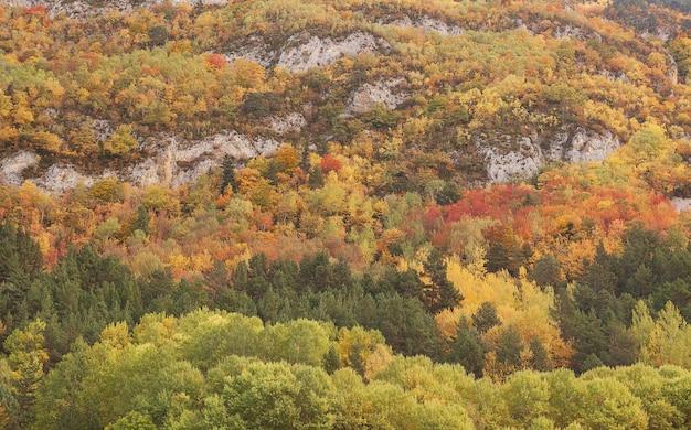 Fascynujący Widok Kolorowych Drzew Na Skalistej Górze Jesienią W Hiszpanii Darmowe Zdjęcia