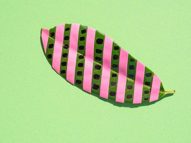 Figowiec odizolowane liść z różowe paski na zielonym tle Darmowe Zdjęcia