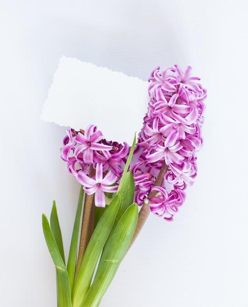 Fioletowe kwiaty hiacyntu Premium Zdjęcia