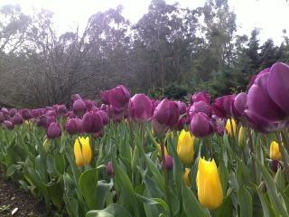 Fioletowy kwiat kwiat Darmowe Zdjęcia