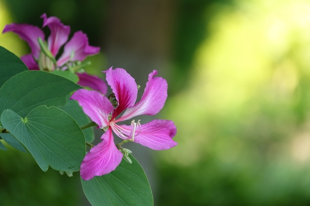 Fioletowy Kwiat Na Tle Unfocused Darmowe Zdjęcia