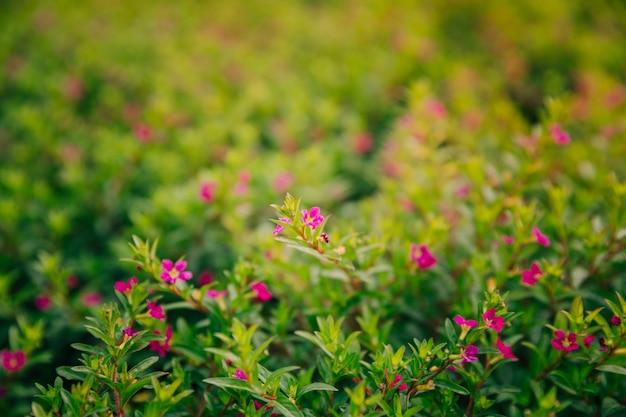 Fiołkowy kwiatu kwitnienie w sezonie Darmowe Zdjęcia