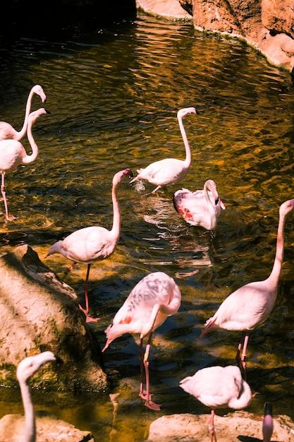 Flamingi Darmowe Zdjęcia