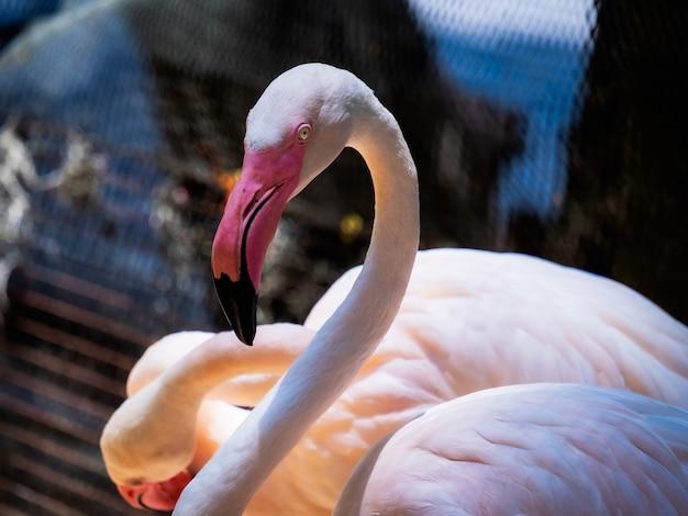 Flamingo phoenicopteridae piękny ptak Premium Zdjęcia