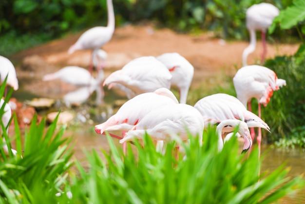 Flamingo ptak różowy piękny na jezioro rzeki przyrody tropikalnych zwierząt Premium Zdjęcia