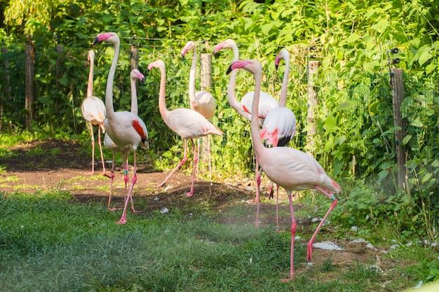 Flamingów Ptaki Stoi W Parku Premium Zdjęcia