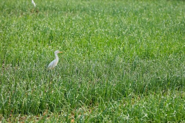 Flamingów Ptaki Stoi W Trawy Polu Premium Zdjęcia