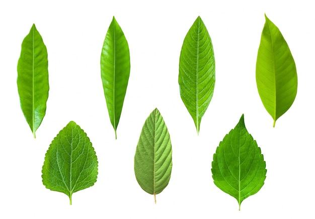 Flora Lato Piękne Drzewa Herb Darmowe Zdjęcia