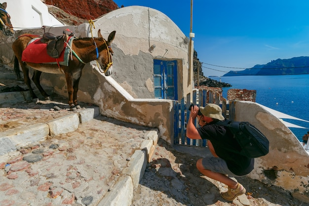 Fotograf Bierze Zdjęcia Osła, Oia, Santorini Premium Zdjęcia