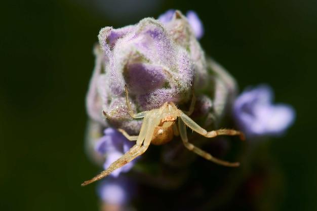 Fotografia Makro Pająka Na Kwitnącej Roślinie Darmowe Zdjęcia
