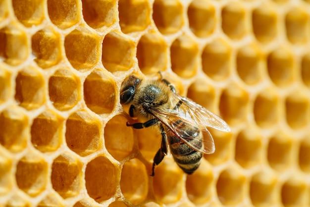 Fotografia Makro Pracujących Pszczół Na Plastrach Miodu. Obraz Pszczelarstwa I Produkcji Miodu Premium Zdjęcia