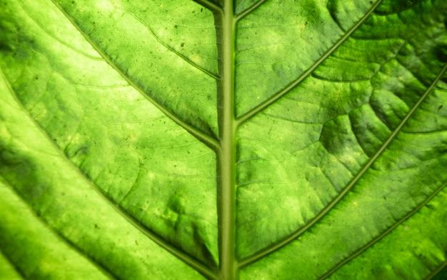 Fotografia Piękny Zielony Liść Makro Darmowe Zdjęcia