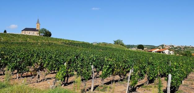Francuskie Winnice W Beaujolais, Niedaleko Wioski Oingt Premium Zdjęcia