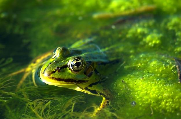 Frog Pływanie Darmowe Zdjęcia