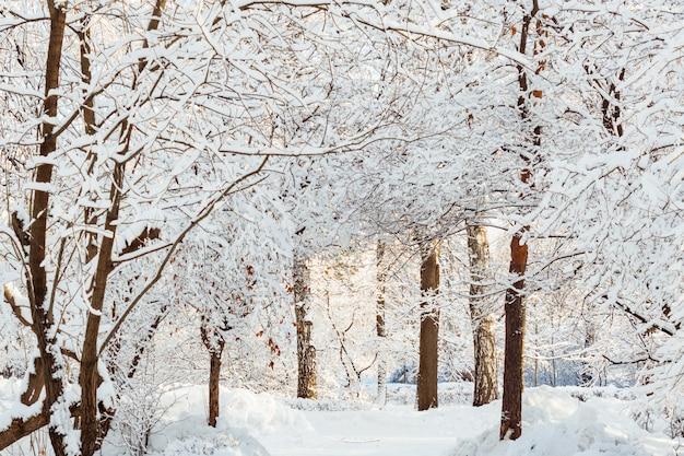 Frossty zimowy krajobraz. drzewa w śniegu Premium Zdjęcia