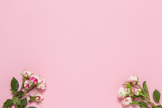 Gałązki Małe Róże Białe I Czerwone Na Różowym Tle Premium Zdjęcia
