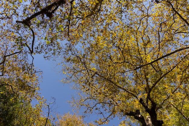 Gałęzie Drzew I Liście W Lesie Premium Zdjęcia