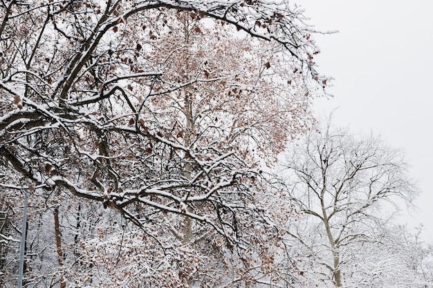Gałęzie drzewa pokryte śniegiem Darmowe Zdjęcia