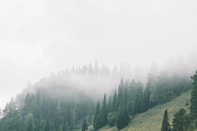 Gęsta Mgła W Górach Z Kopii Przestrzenią Na Mgle. Vintage Mglisty Krajobraz Majestatycznej Przyrody W Wyblakłych Odcieniach Zieleni W Stylu Hipster. Premium Zdjęcia