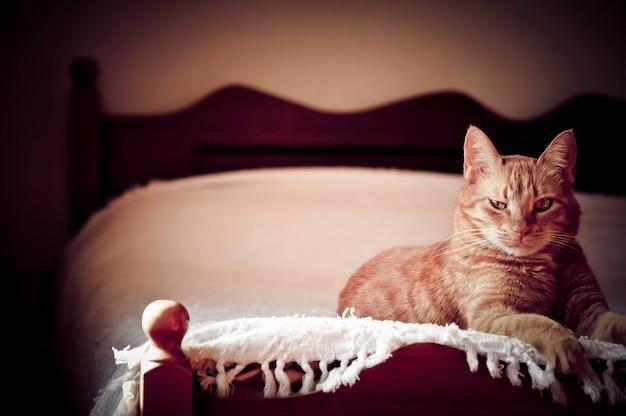 Ginger Cat r. Na łóżku Darmowe Zdjęcia
