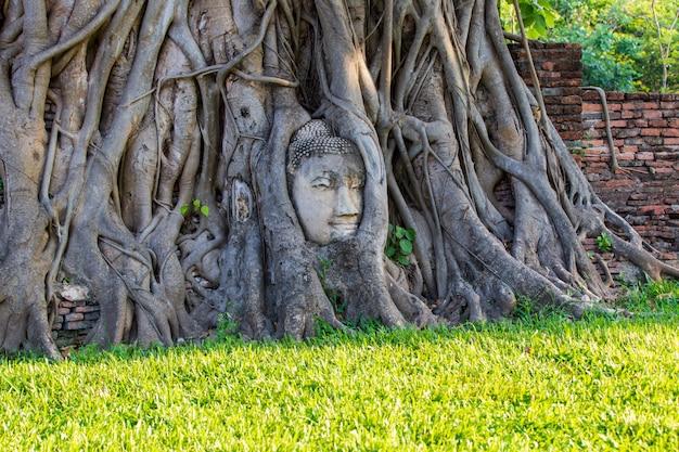 Głowa buddha statua w drzewie zakorzenia przy watem mahathat w ayutthaya prowinci, tajlandia Premium Zdjęcia