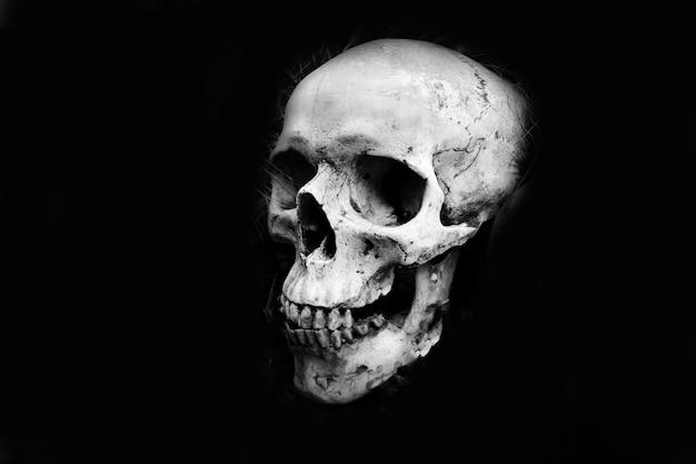 Głowa Ludzkiej Czaszki - Monochromatyczna Premium Zdjęcia