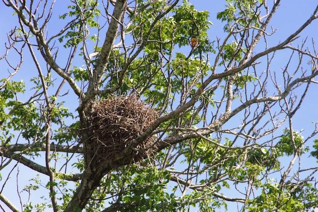 Gniazdo Ptaków Na Wiosnę Premium Zdjęcia