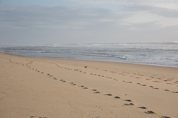 Gołe Kroki Na Piasku Na Plaży Premium Zdjęcia