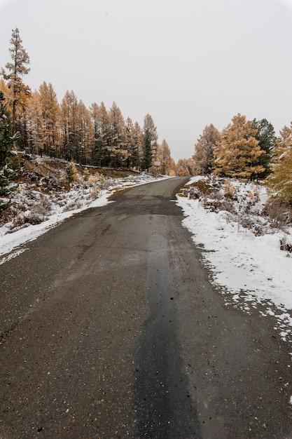 Górska droga przez lasy modrzewia i jodły zimą Premium Zdjęcia