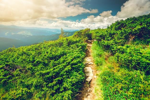 Górska ścieżka w karpatach na ukrainie. Premium Zdjęcia