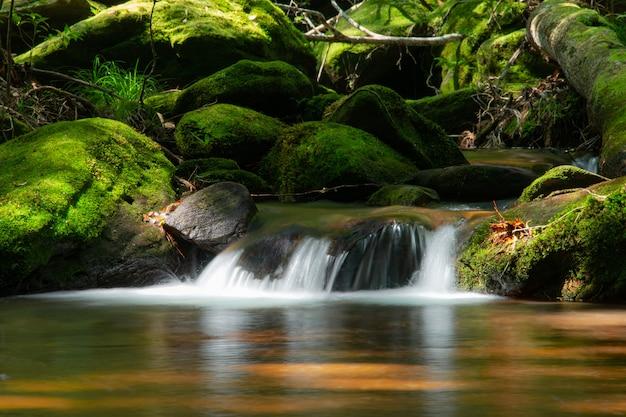 Górski strumień wody płynące w zielonym lesie Premium Zdjęcia