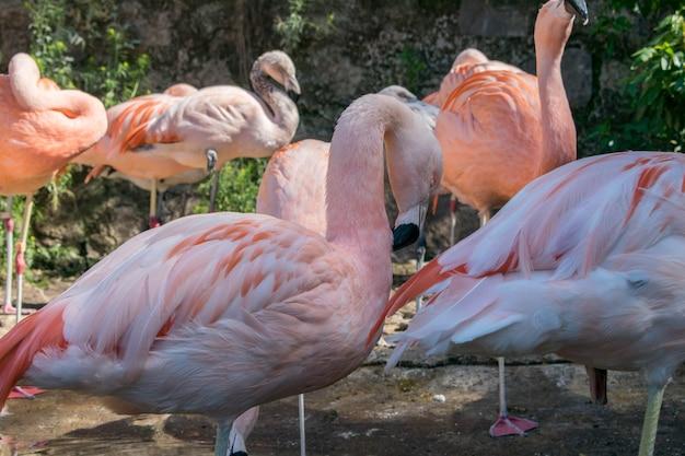 Grupa Flamingów W Egzotycznym Otoczeniu Darmowe Zdjęcia