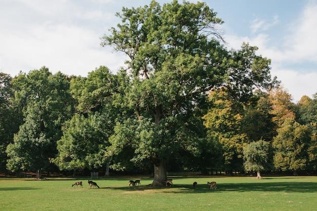 Grupa Młodych Jeleni Idzie Przez Ciepłą, Zieloną, Słoneczną łąkę W Lesie Obok Drzew Premium Zdjęcia